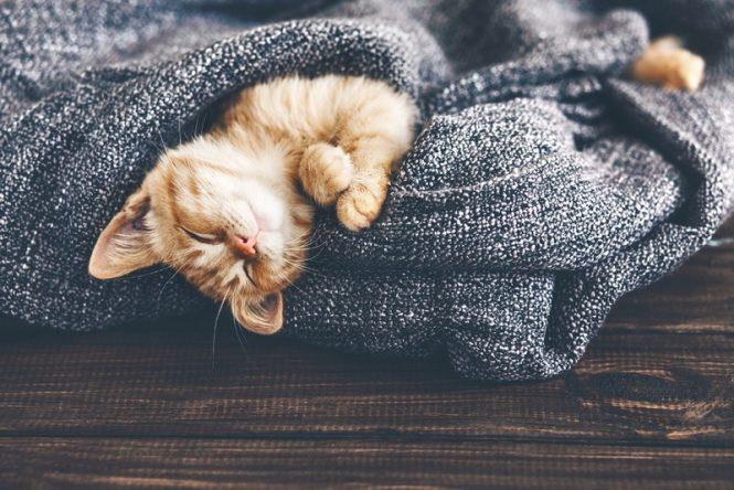 How #introverts are like cats. #introverted #cat